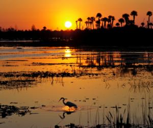 Lakeland Florida Lakes